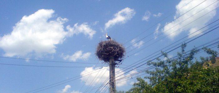 A stork's nest