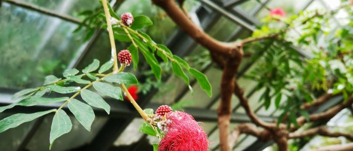 The flower fruit
