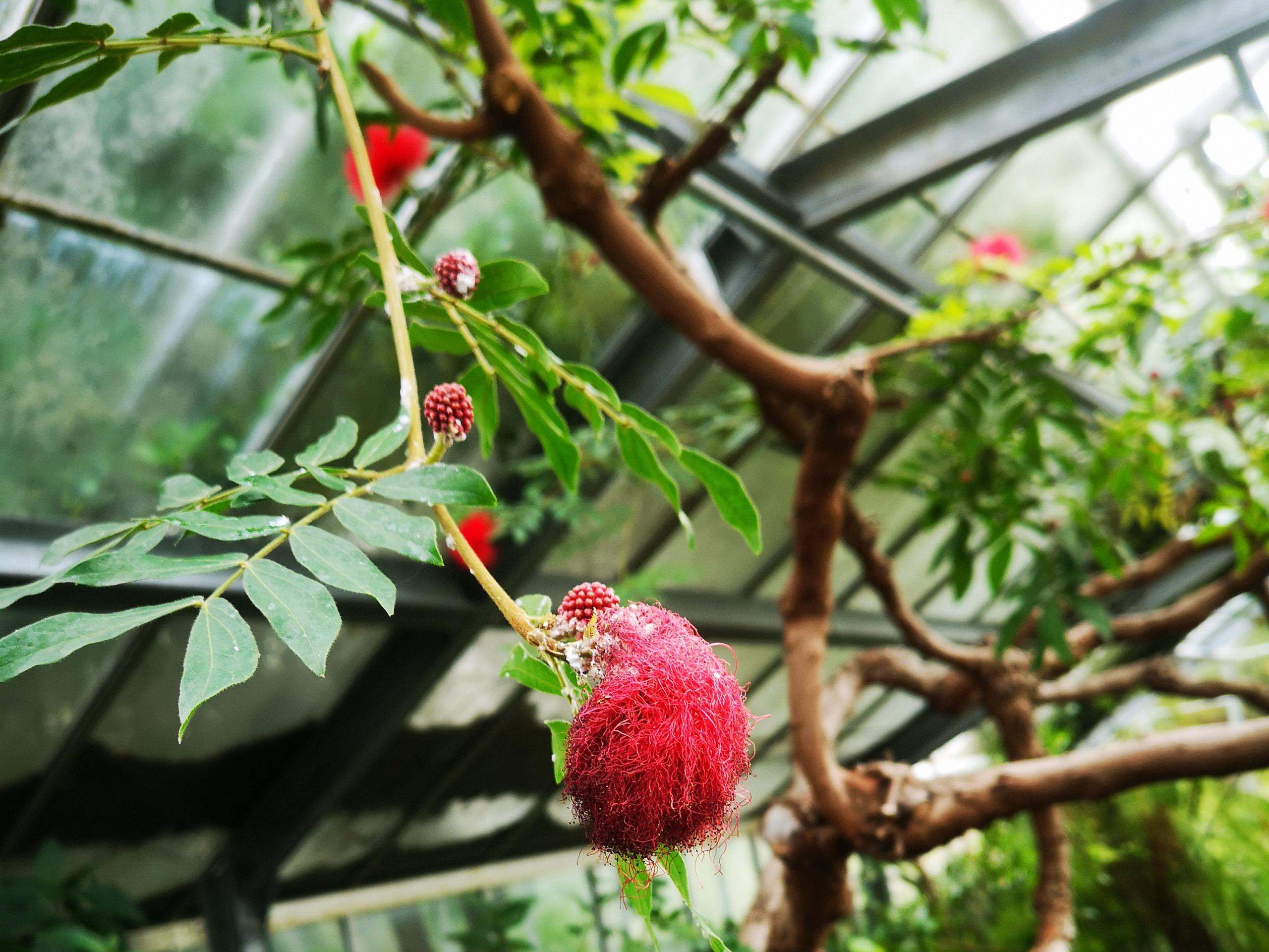 The flower fruit