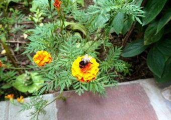 Under the bumblebee