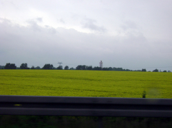 Rapeseed field near Vetschau